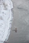 A woman entering the cold Yenisei after a banya visit.