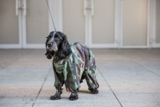 Moscow Dog in Camouflage