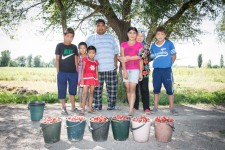 Kyrgyz family selling strawberries from their field on the side of a road outside Bishkek.